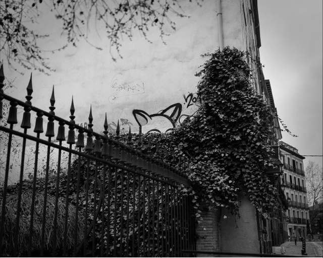 El fotógrafo Rafael Trapiello expone su trabajo 'Así fue' en la Galería Arniches 26