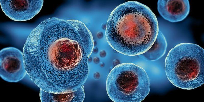 nucleo celula