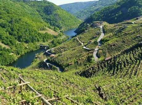 La viticultura heroica en la Ribeira Sacra