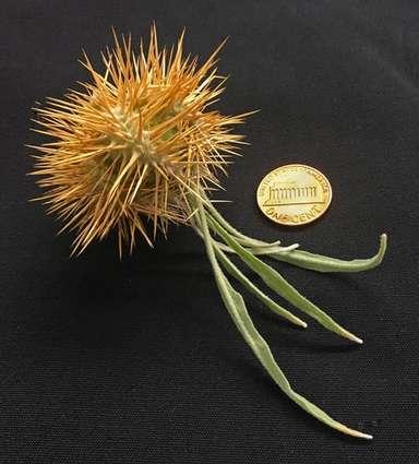Solanum ossicruentum 8