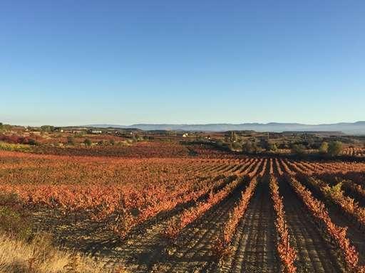 Viñedo en Rioja 3