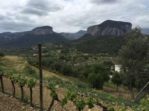 Viñedo en Sierra de Tramuntana Mallorca